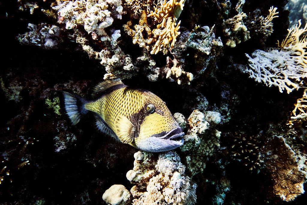 unterwasser-tauchen-aegypten-rotes-meer-1.jpg