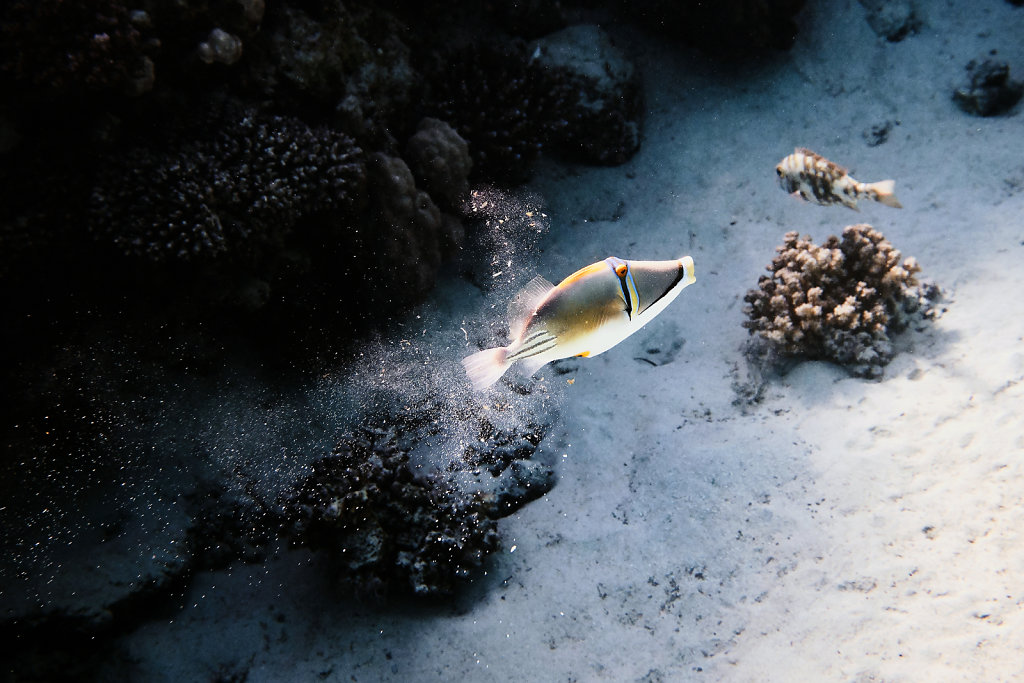 unterwasser-tauchen-aegypten-rotes-meer-3.jpg