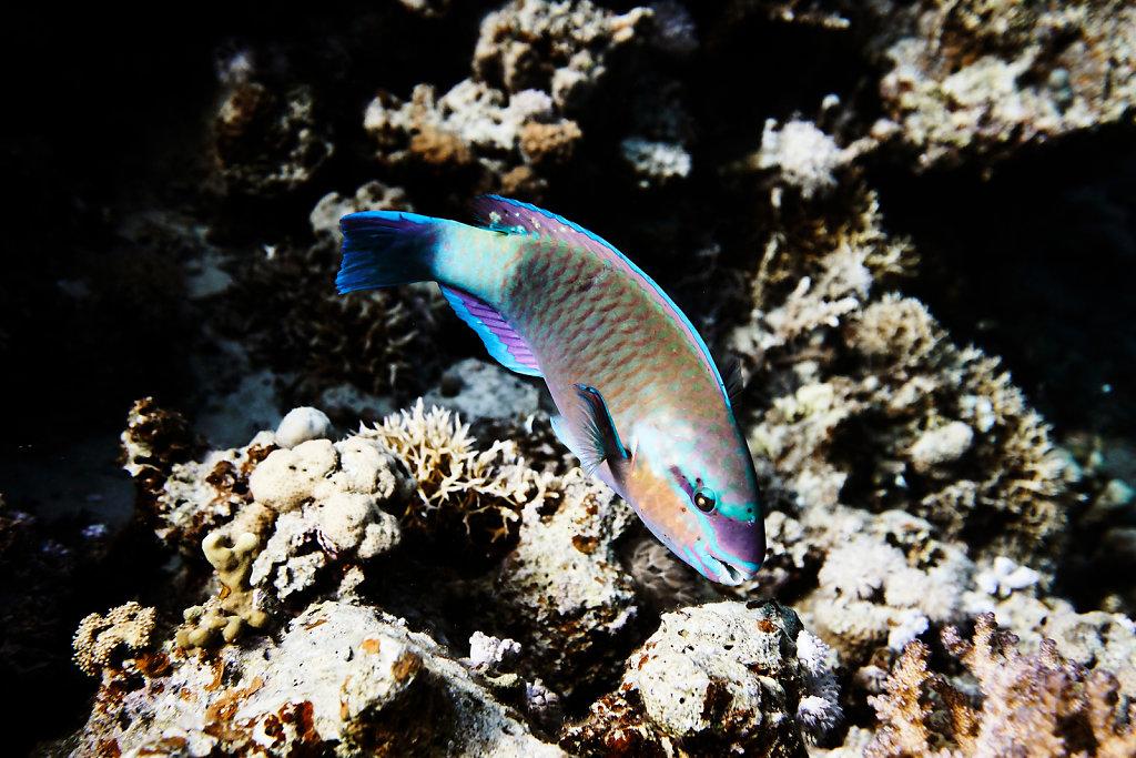 unterwasser-tauchen-aegypten-rotes-meer-7.jpg